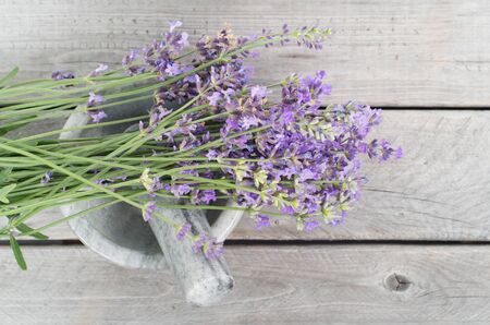 flor de lavanda: Las hierbas frescas de lavanda en el mortero de m�rmol - la medicina alternativa, el concepto de cosm�tica saludable Foto de archivo