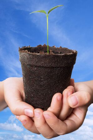 peat pot: Asian Child hands holding lemon seedling in brown peat pot against blue sky background