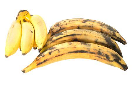 Three plantain bananas versus regular on white background Zdjęcie Seryjne