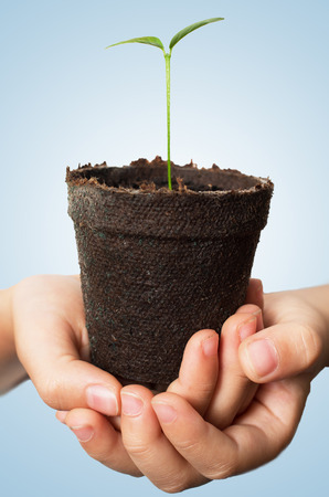 Asian Child hands holding lemon seedling in brown peat pot against blue aqua background Stock Photo