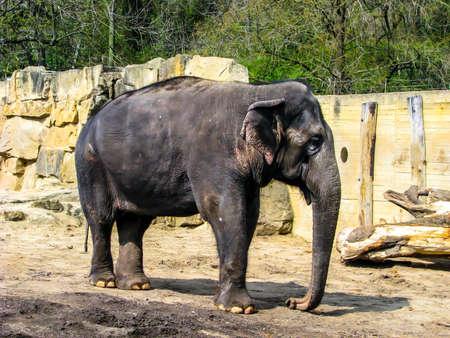 Beautiful elephant in sunny day - whole body.