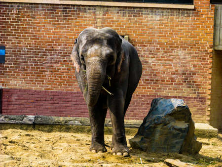 Beautiful elephant in sunny day - whole body. Stock Photo - 121614490