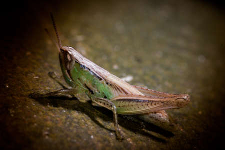 fruition: An Image of Grasshoppers
