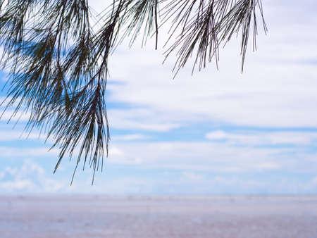 pine needles close up: Pine tree silhouette on blue sky background