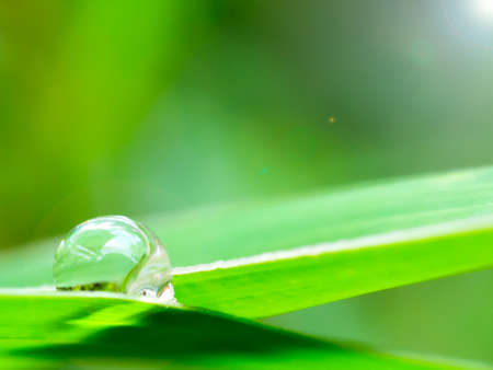 Water drop on the green leaf in the morning time,Concept of Purposeful and Commitment