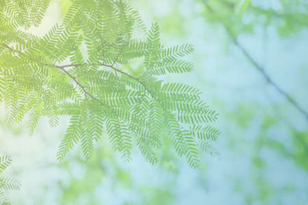 green leaves and branches, pastel tone color 스톡 콘텐츠
