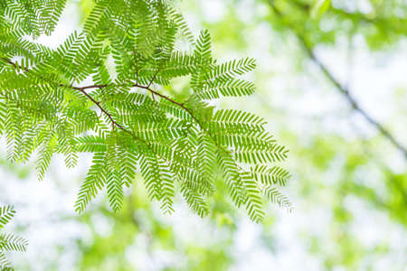 plant growth: green leaves and branches