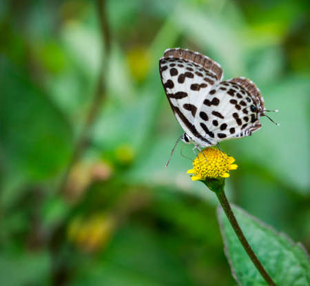 butterfly and yellow flower in nature Stock Photo