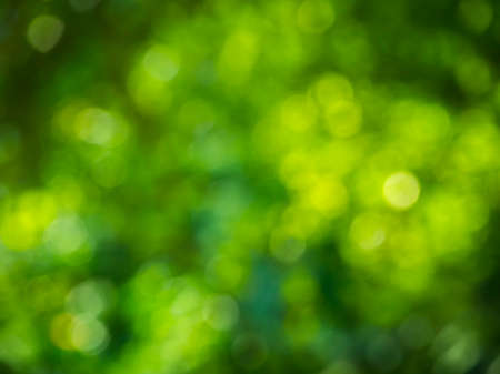 jungle foliage: Natural green blurred background