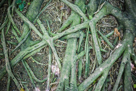 Close Up Roots With Fertile Soil Background Stock Photo, Picture And ...