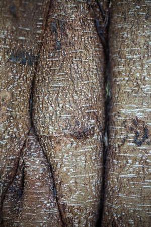 fertile: roots texture in the fertile garden. Stock Photo