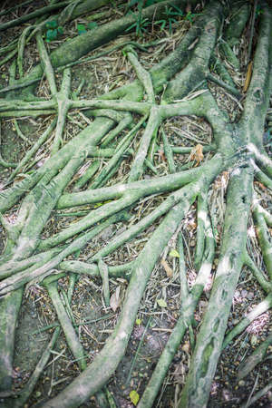 Roots In The Fertile Garden. Stock Photo, Picture And Royalty Free ...
