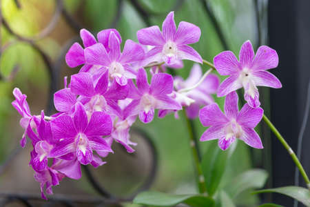 Orchid flower, The Orchidaceae are a diverse and widespread family of flowering plants, with blooms that are often colourful and fragrant, commonly known as the orchid family.