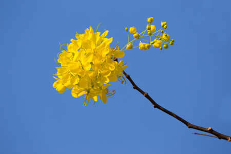 Yellow flower on blue sky background. Standard-Bild