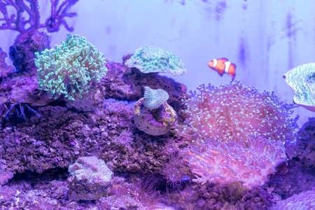 Beautiful sea flower in underwater world with corals  and fish. Фото со стока