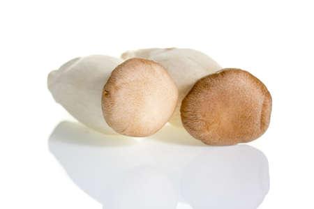 Musroom isolated on white background