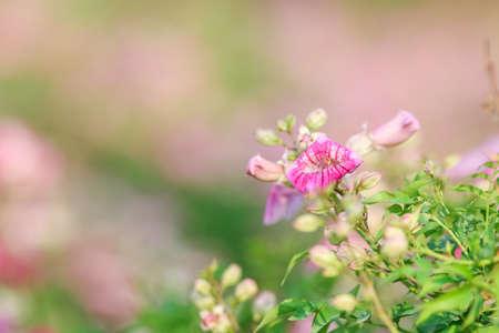 Pink flower natural color background. 스톡 콘텐츠