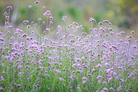 Puple flower natural color background.