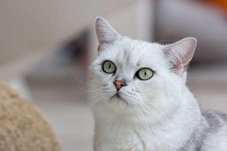 close up of cat kitten  版權商用圖片