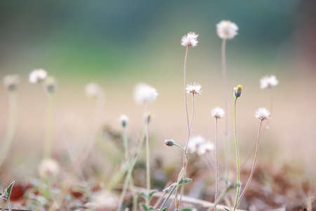 grass flower natural color background. 스톡 콘텐츠