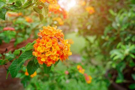 Orange flower with water drop and blured green background. 版權商用圖片 - 149658393