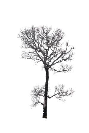 Tree isolated on white background 版權商用圖片 - 166293761