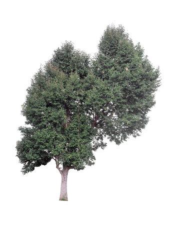 Tree isolated on white background 版權商用圖片 - 166293764