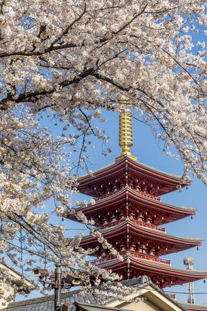 Beautiful spring atmosphere with the pagoda tower Stockfoto
