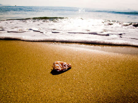 seashores: A small shell lies in front of a wave on the seashore under the morning sunshine Stock Photo