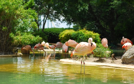 A herd of cranes in small shallow pond 版權商用圖片
