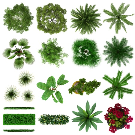Tropical Plants Collection Plan View Isolated on White Background