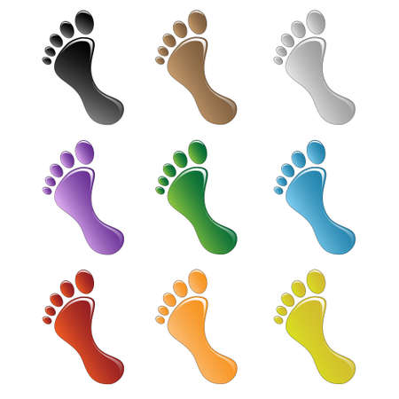 Illustration of a human foot on a white background. illustration