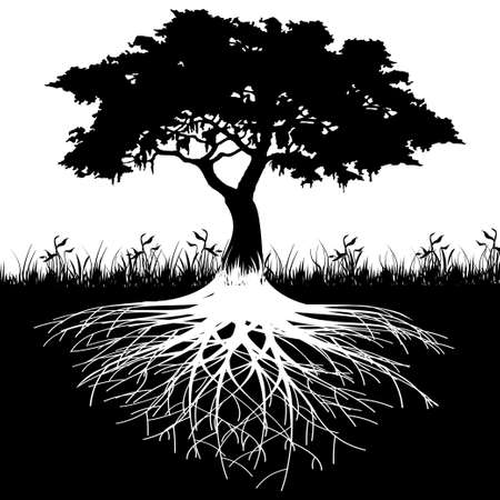 bomen zwart wit: Boomwortels silhouet Stock Illustratie