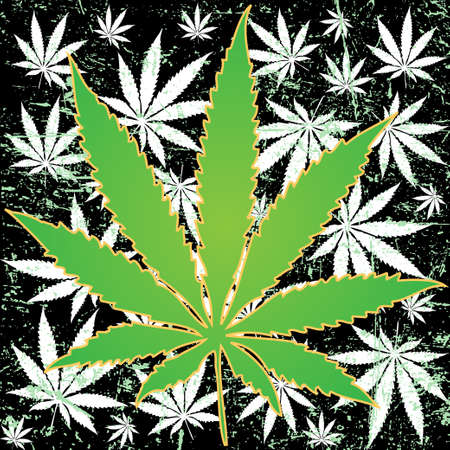 cannabis sativa: Marijuana background