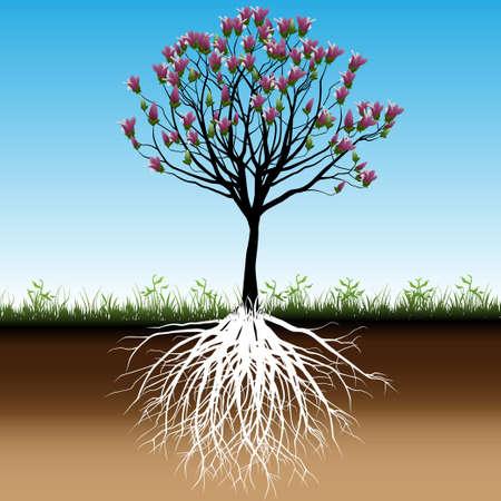 arbol con raices: Flor del árbol