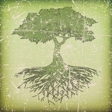 raices de plantas: �rbol