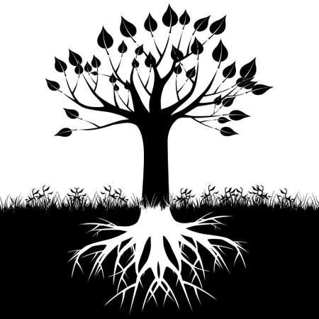 boom wortels: Boomwortels silhouet Stock Illustratie