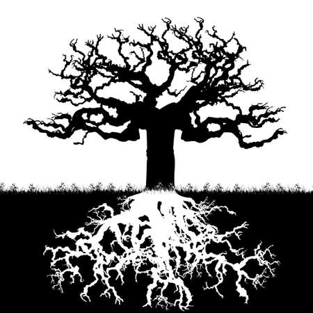 Tree illustration Ilustrace
