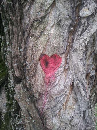 passion ecology: Tree heart Stock Photo