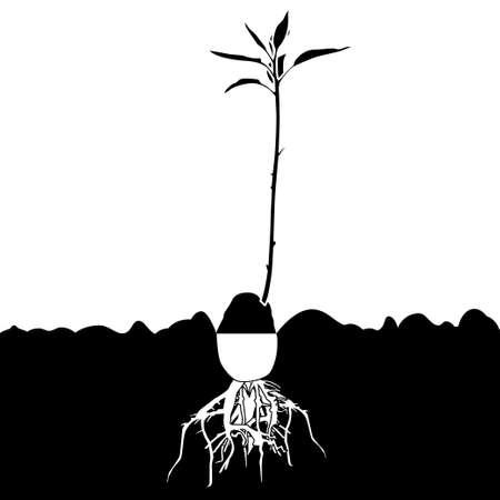 arbres silhouette: Avocado plant-tree