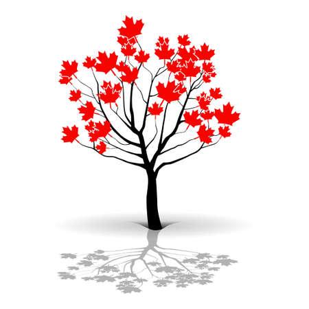 maple tree: Maple Tree-Canada