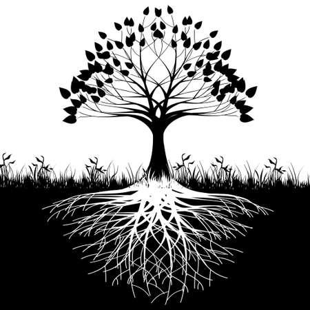 Sylwetka korzeni drzew