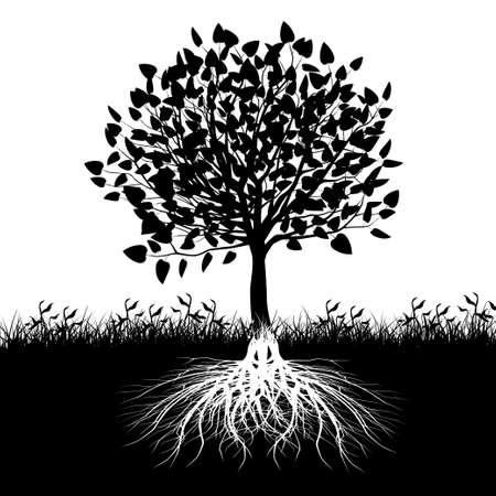 Sylwetka korzeni drzewa.