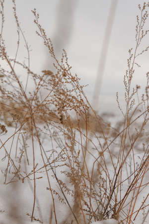 dry plants in the snow on a hill road
