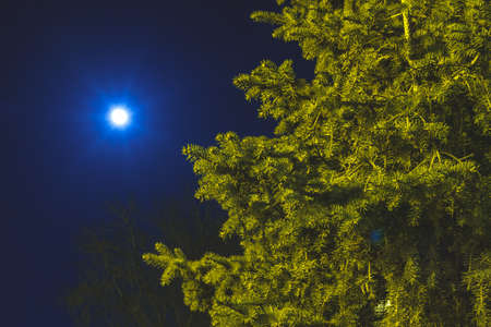 A green spruce lit by light against the background of a full moon in a dark night sky Standard-Bild