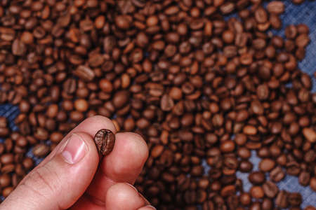 Close-up of fingers showing roasted coffee bean