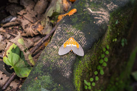 exotic gleam: Beautiful exotic butterfly in the jungle, Cambodia Stock Photo