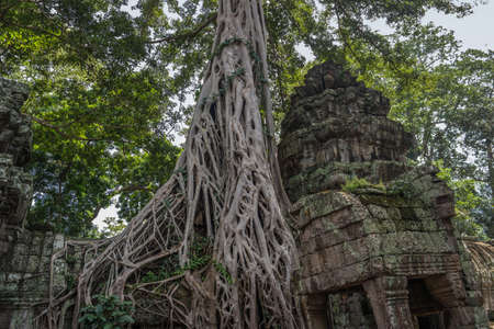 Banteay Kdei temple with silk cotton tree roots in Angkor, Siem Reap, Cambodia. Stock Photo