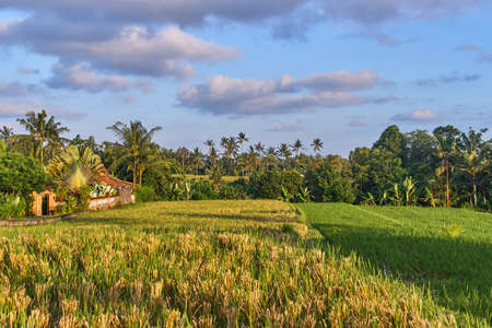 Beautiful rice terraces in Ubud, Bali island, Indonesia