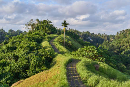 Campuhan Ridge Walk sacred trail, on Bali island, Indonesia 写真素材 - 98550666